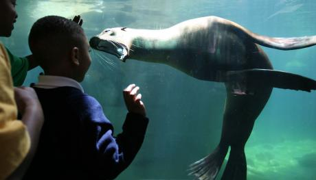 Memphis Zoo Sea Lions: Commercial Appeal