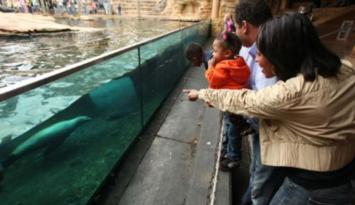 See the Sea Lion show at the Memphis Zoo. Photo by Troy Glasgow.
