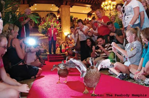 Peabody hotel ducks in memphis